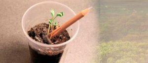 Sprout, lápiz con semilla 1
